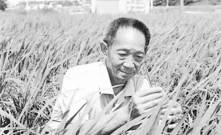 """""""杂交水稻之父""""、中国工程院院士、""""共和国勋章""""获得者袁隆平因病医治无效,于 5 月 22 日 13 时 07 分在长沙逝世,享年 91 岁。"""