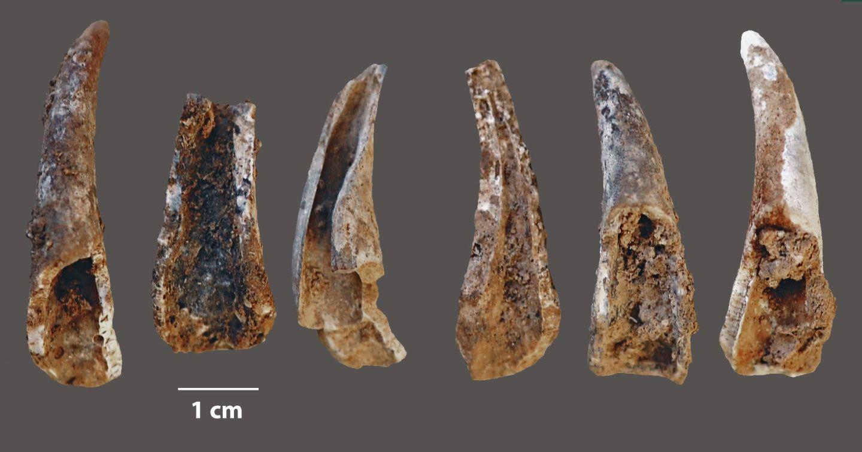 大概8.6万-10.6万年前生活在海边洞穴中的尼安德特人烧烤螃蟹后留下的蟹脚遗迹。